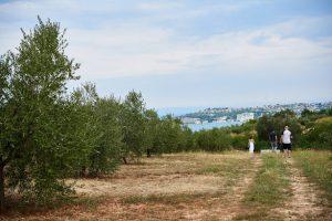 Monte Rosso Istra сади